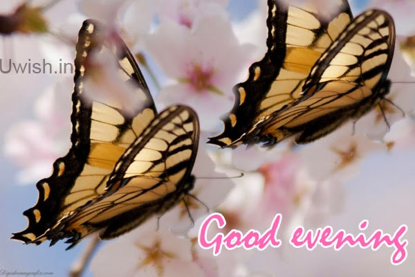 Good Evening e greeting cards and wishes, quotes with  butterflies colors the world.