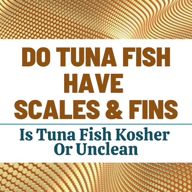 Do Tuna Fish Have Scales And Fins | Is Tuna Fish Kosher Or Unclean?