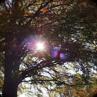 Die Sonne scheint durch die Baumkrone