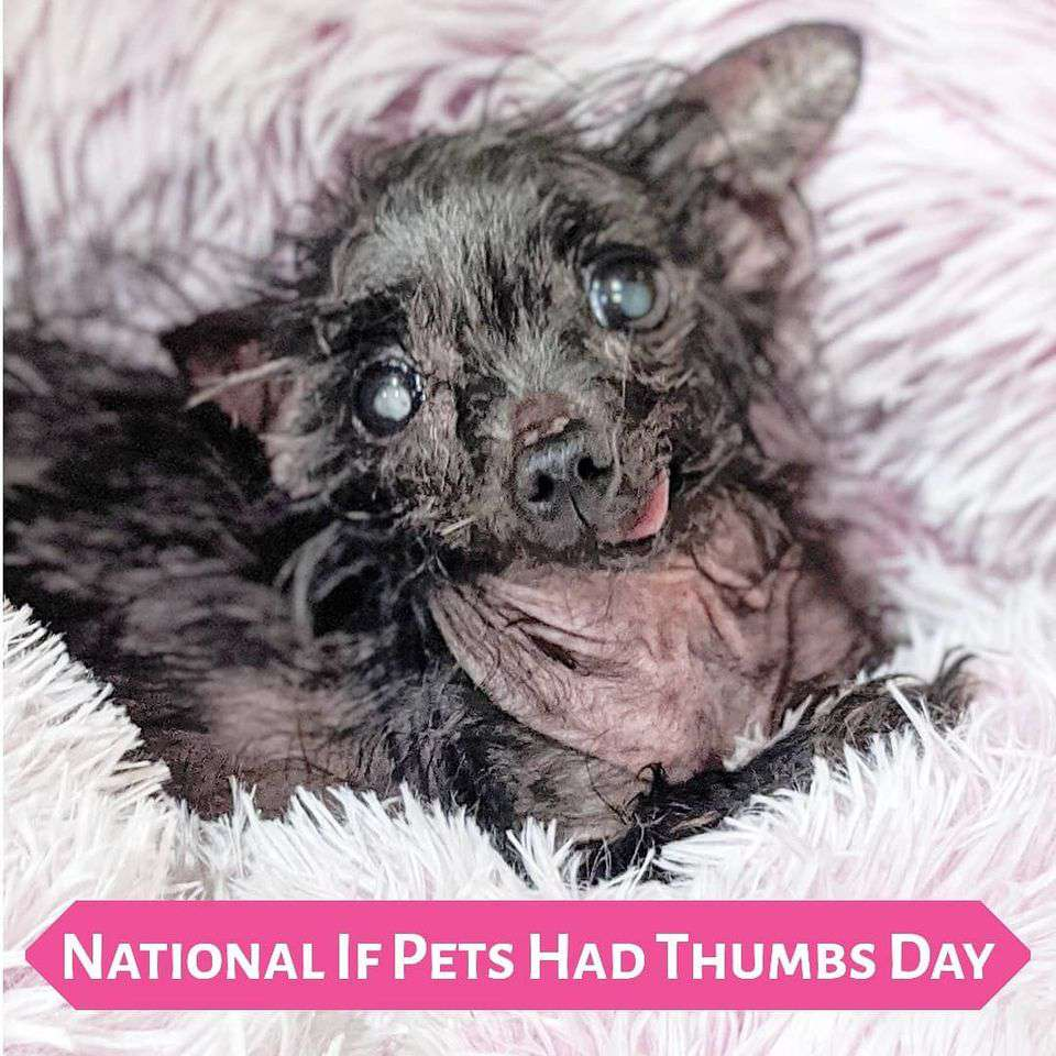National If Pets Had Thumbs Day Wishes Pics
