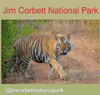 जिम कार्बेट राष्ट्रीय उद्यान उत्तराखंड ।  Jim Corbett National Park Uttarakhand