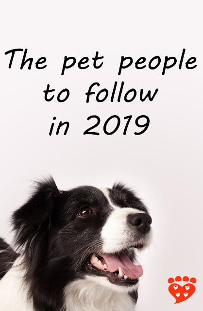 Dog science, cat science, animal behaviour, animal welfare, scientists and bloggers to follow on social media in 2019