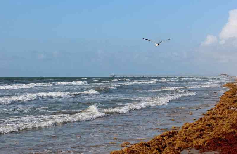 Padre Island National Beach, Corpus Christi
