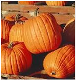 Nutritional contents of pumpkin