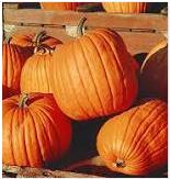 Nutritional contents of pumpkin