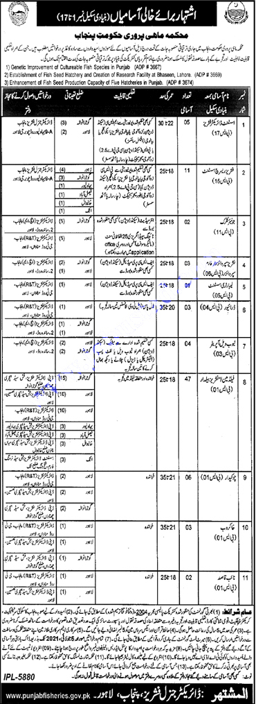 Fisheries Department Govt of Punjab Jobs 2021 Latest Advertisement