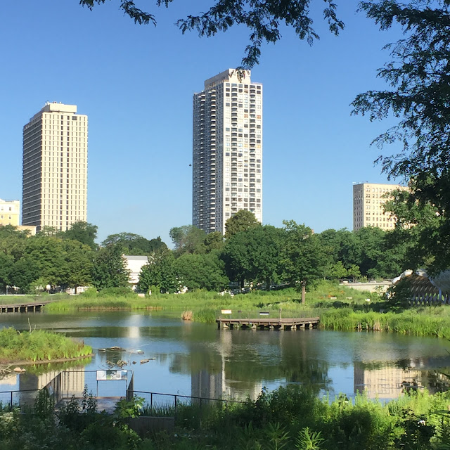 pond in the park - chicago