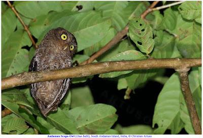 Christian Artuso: Birds, Wildlife - photo#48