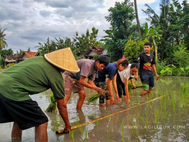 Bertani di Desa Wisata Kebonagung Bantul