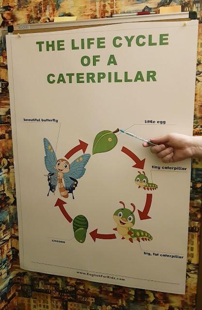Caterpillar life cycle poster
