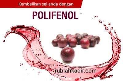 Kebaikan Polifenol Untuk Sel Yang Sihat