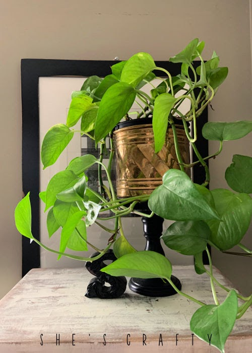 Brass bucket holding a houseplant in a home.