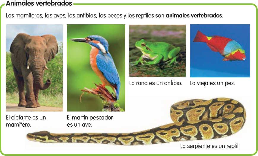 Imágenes de animales vertebrados para imprimir | Material para ...