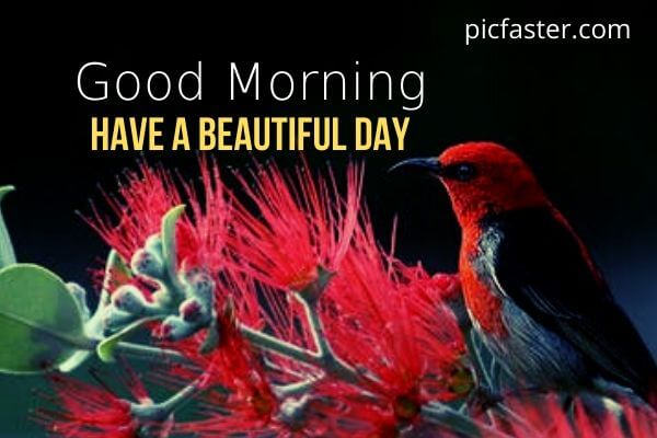 Top [2020] Beautiful Good Morning Nature Images, Photos Download