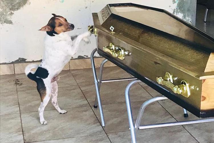 """Camaçari: O cão """"Toy"""" não saiu de perto do caixão da dona durante velório"""