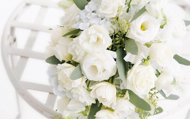 white rose photos, flowers dp