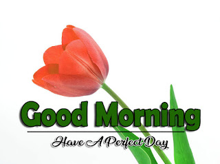 New Good Morning 4k Full HD Images Download For Daily%2B82