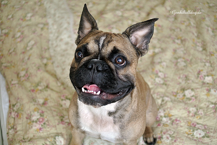 Geräuschloses Ultraschall Hundespielzeug