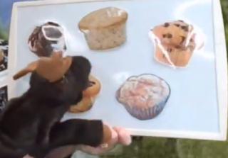 Moose storytime, moose rhyme, moose flannel board, muffin rhyme, muffin flannel board