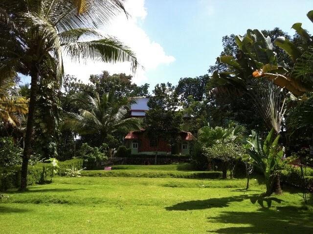 Garden at the Sivananda ashram