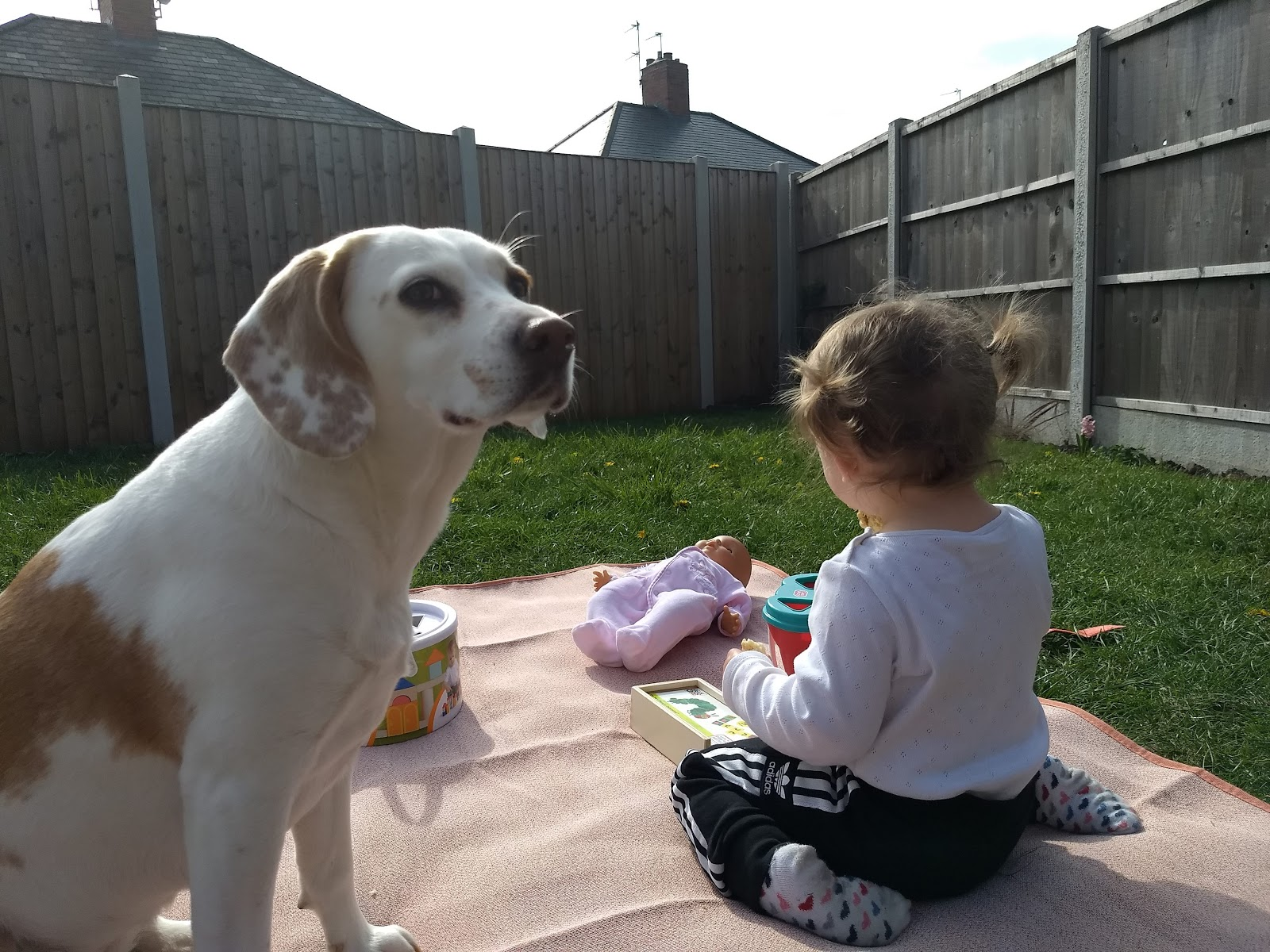 Toddler and puppy sitting on picnic blanket outside.