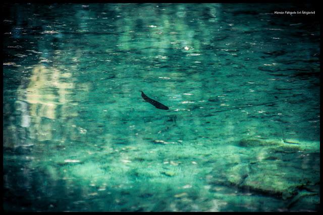 terre-des-lacs-saint-auban