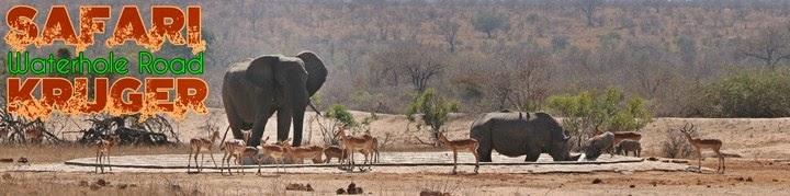 Safari-por-libre-en-Kruger-Shukuza-Waterhole-Road