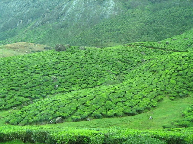Pothamedu View Point Munnar, Best Places to Visit in Munnar