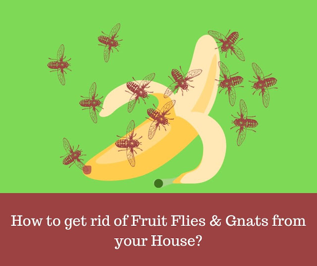 7 effective ways to get rid of fruit flies and gnats successfully