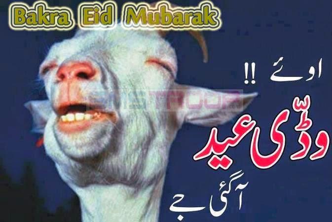 Funny Bakra Eid Ul Adha Mubarak Wallpaper Images Sms