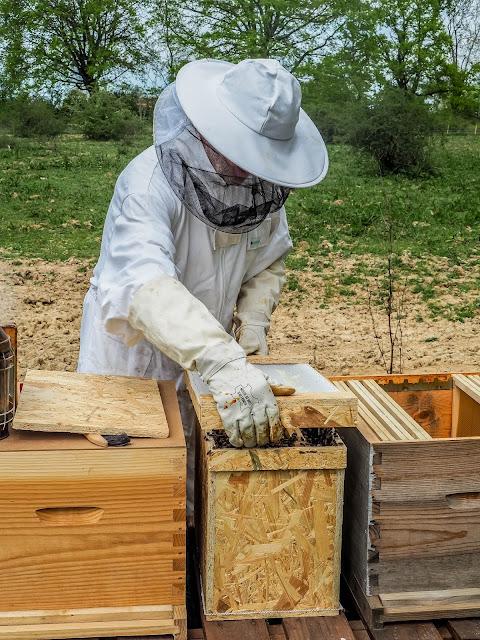 Bijenvolken overzetten