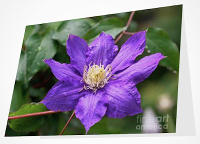 This image is from Fie Art America @ https://fineartamerica.com/featured/purple-clematis-patricia-youngquist.html?product=greeting-card