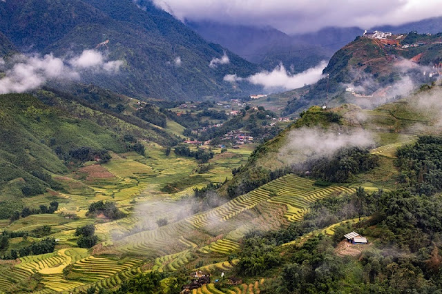 Rice Harvest And 10 Memorable Experiences in Sapa, Vietnam 1