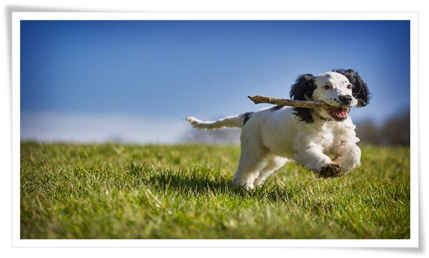 dog good behavior