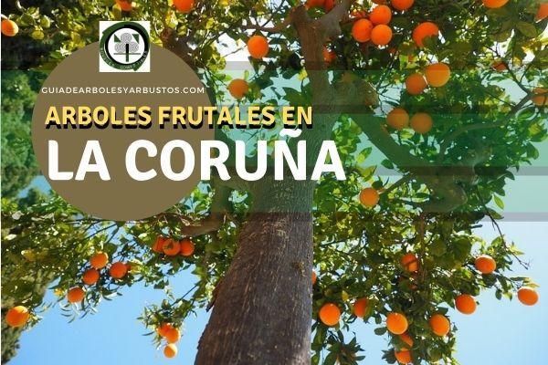 Arboles Frutales en La Coruña, España