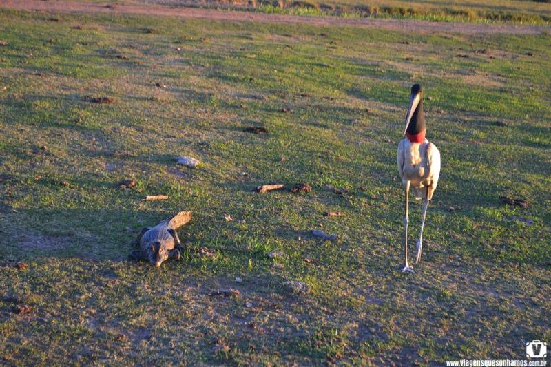 Pantanal e Bonito com crianças