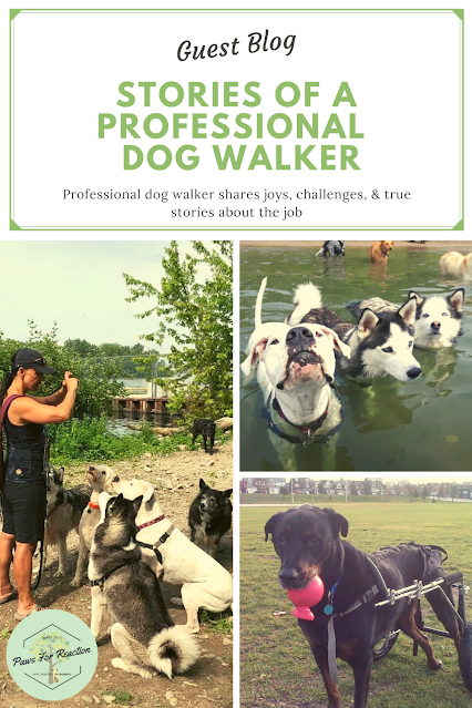 What it's really like to be a professional dog walker