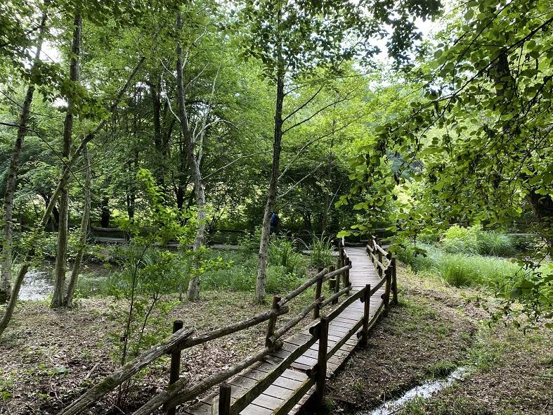 Lo stagno nel Parco di Montevecchia