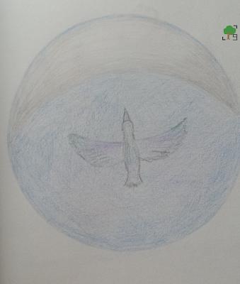 lunula i ptak