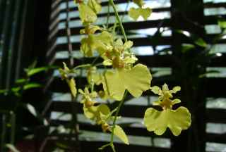 Foto 4 - orquídeas terrestres