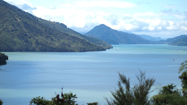 2 weeks in New Zealand road trip itinerary: Queen Charlotte Drive views at Cullen Point