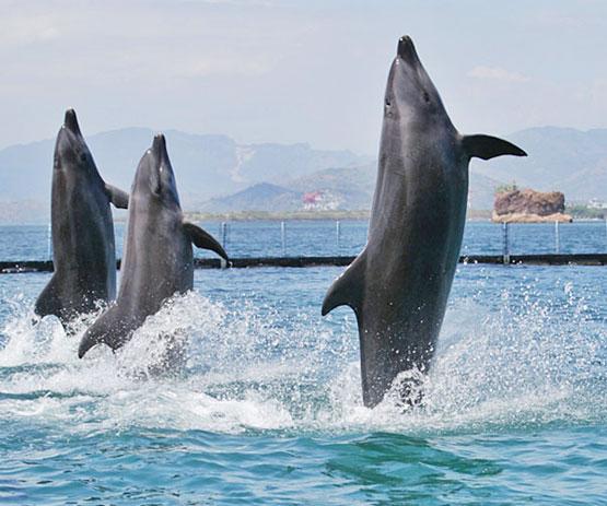 dolphins dance on the beach