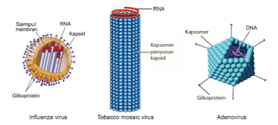 yuk-belajar-mengenal-virus-si-makhluk-kecil-ajaib