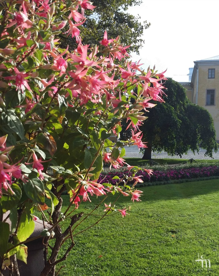 kukkaloistoa Tuomiokirkkopuistossa Turussa