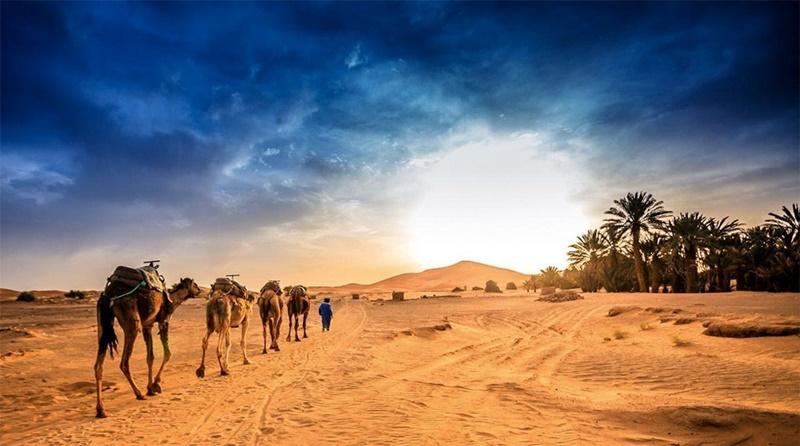 Caravana de camelos no deserto