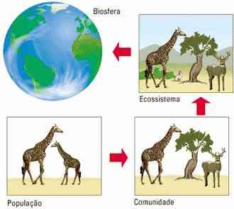População em Ecologia