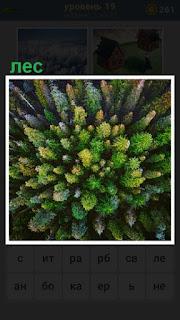 вид сверху на лес, одни макушки елок видны