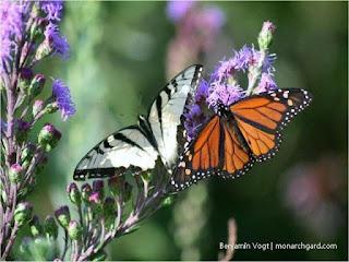 http://gardeninggonewild.com/?p=29984