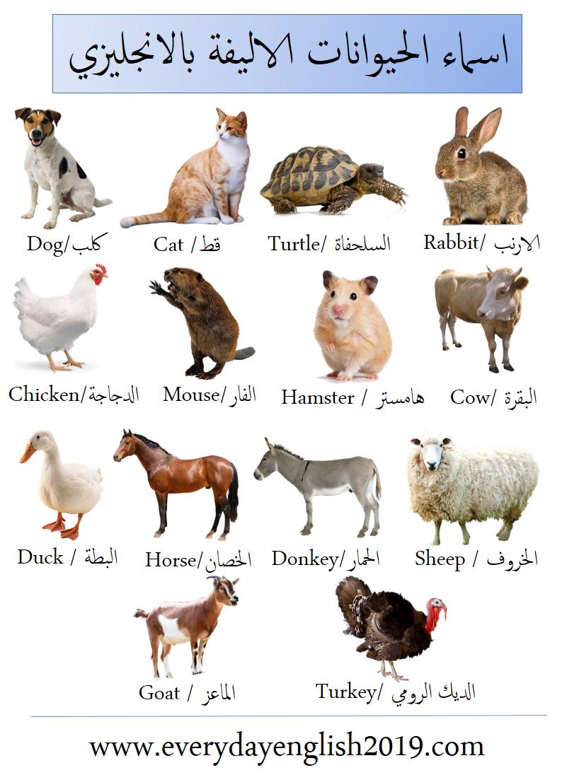 اسماء الحيوانات بالانجليزي -الاليفة-