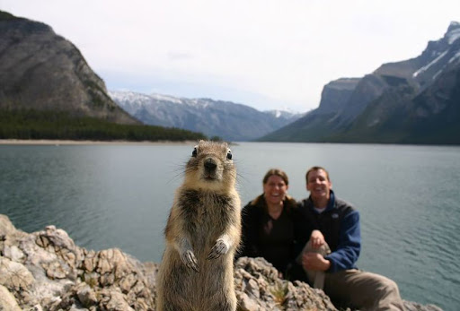 Animals Photo Bomb Photos
